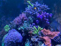 Ravinteiden määrä meriakvaariossa sekä niiden haitat ja hyödyt